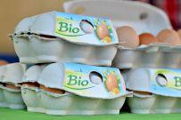 Die Eier werden bei uns am Hof gleich verpackt und kommen tagfrisch auf den Markt oder in den Bioladen