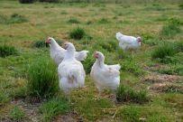 Eier und Fleisch aus artgerechter Tierhaltung.