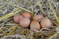 Eier in Bioland-Aualität direkt vom Hof