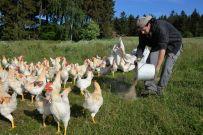 Auch das Zusatzutter ist aus Bio-Anbau. Anibiotika und Hochleistungsfutter sind tabu.
